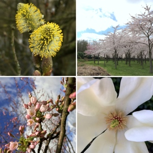 maRRose - CCC - Spring 2016-05
